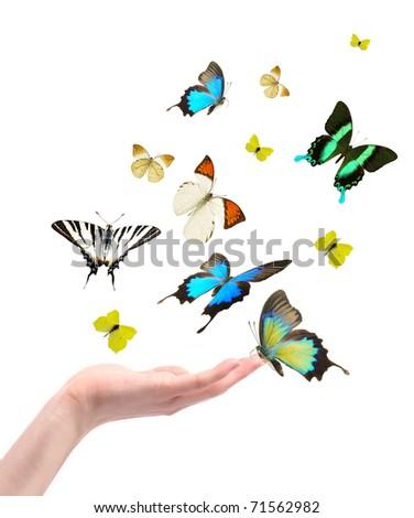 Hand releasing exotic butterflies. - stock photo