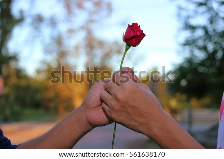 Hand's of man is giving a red rose to a woman on special occasion on nature blurred background. Romantic lover dating or Valentine's day concept