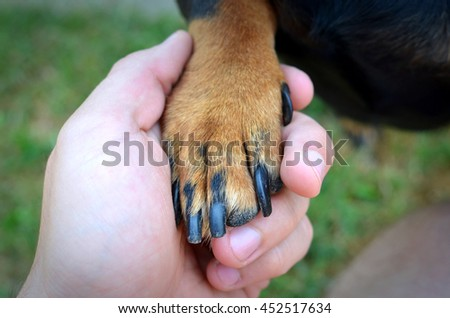 Hand shaking. Hands and paws together. True friendship between man and dog. - stock photo