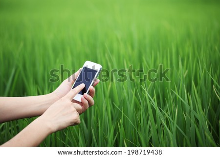 hand using mobile with paddy field background. - stock photo