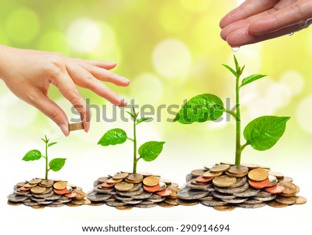 hand watering a young plant growing on stacks golden coins / Business with csr practice / Green Business - stock photo