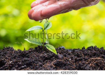 Hand watering a young plant over green nature background - stock photo
