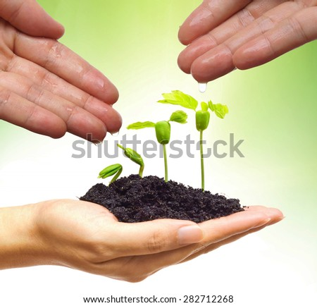 hand watering young plants growing in germination sequence on hand with green background - stock photo