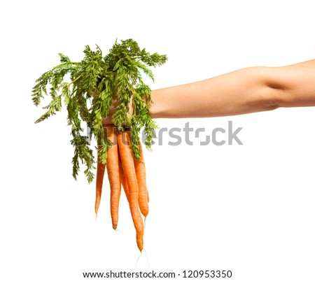 Hand with a bunch of fresh carrots with green leaves isolated on white - stock photo