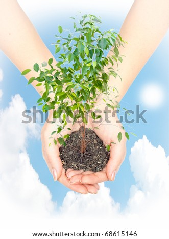 Hand with a plant on background of blue sky with sun