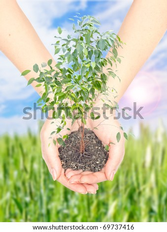 Hand with a plant on background of blue sky with sun and green field