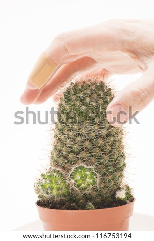 Hand with bandaid on a finger touching a cactus