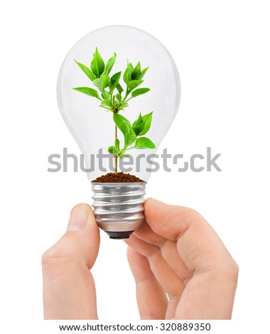 Hand with bulb and plant isolated on white background - stock photo