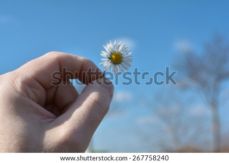 Hand with daisy in Springtime - stock photo