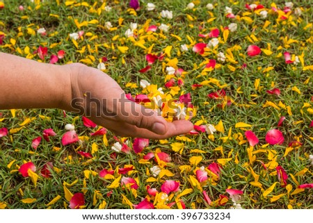 hand with flower in field