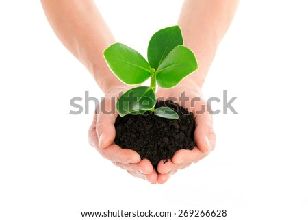 Hand with green plant - stock photo