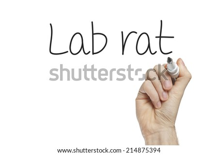Hand writing lab rat on a white board - stock photo