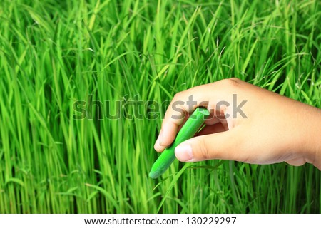 Hand writing rice field