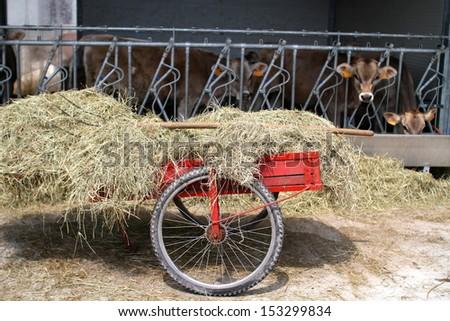 handcart with hay on a breeding farm - stock photo