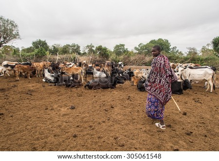 HANDENI, TANZANIA - AUGUST 01, 2015: Young Maasai warrior with his cattle in Maasai boma (village) in Tanzania, Africa. - stock photo