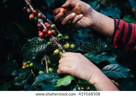 Handful of fresh organic coffee beans. - stock photo