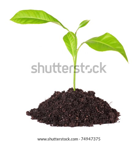 Handful of the ground and plant, isolated on a white background - stock photo