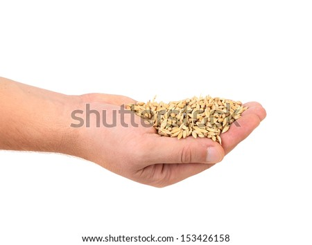 Handful of wheat grain. Isolated on a white background. - stock photo