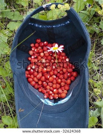 Handful of wild strawberry with a camomile in a baseball cap