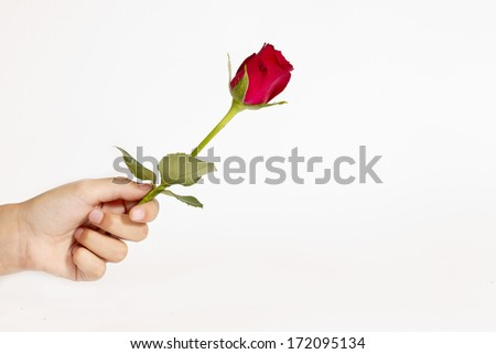 handing a rose as a representation of love to someone - stock photo