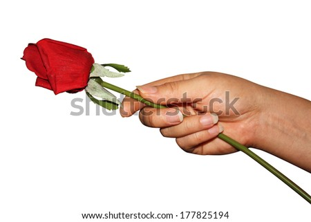 Handing Rose isolated - stock photo