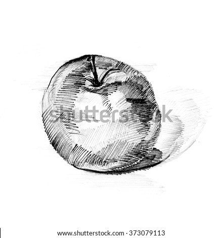 Handmade apple pencil draw pencil line drawing apple black and white drawn apple