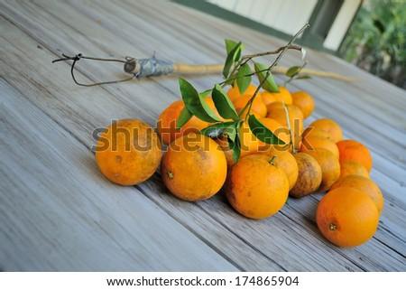 handmade orange picking - stock photo