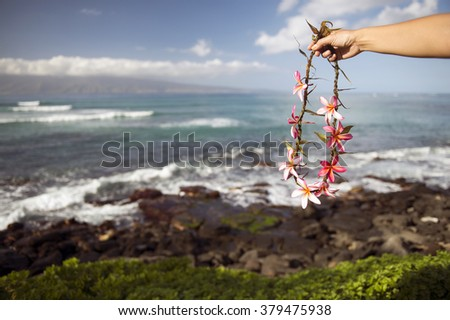Handmade Ray and the beautiful sea of frangipani that have to hand-1 - stock photo