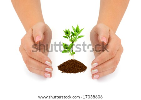 Hands and plant isolated on white background - stock photo