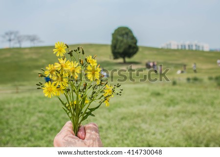 Hands clutching the flower meadow and sky.,Green meadow full of flower. - stock photo