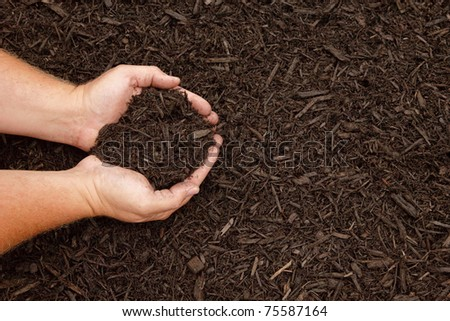 Hands displaying dark brown mulch for gardening - stock photo