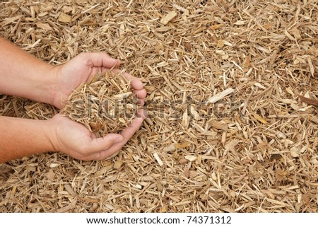 Hands displaying light colored mulch - stock photo