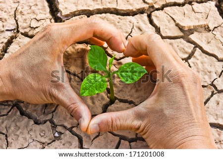 hands forming a heart shape around a tree growing on cracked ground /hands growing tree / save the world / environmental problems / growing tree / csr - stock photo