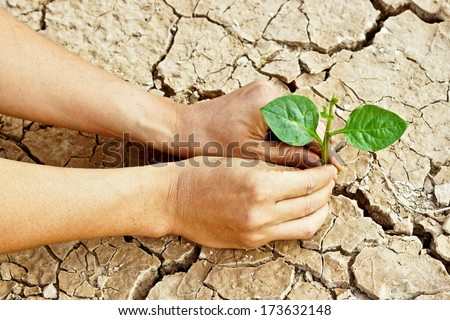 hands growing a tree growing on cracked earth /hands growing tree / save the world / environmental problems / love nature / heal the world / cut tree - stock photo