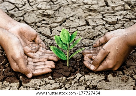 hands growing a tree on crack ground - stock photo