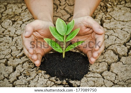 hands growing a tree on cracke ground / tree growing on cracked earth / hands growing tree / save the world / environmental problems / love nature / heal the world / cut tree / love tree - stock photo