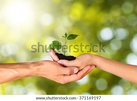 Hands hold a sprout.