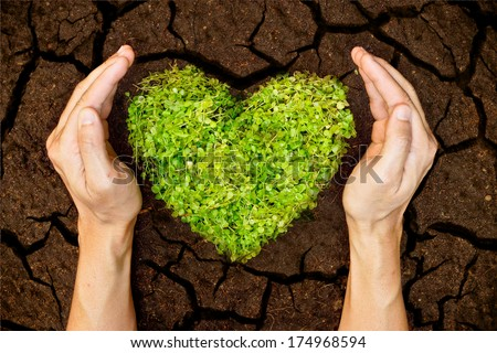 hands holdin a tree arranged as a heart shape on cracked earth / growing tree / love nature / save the world / csr - stock photo