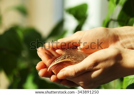 Hands holding a feather on green leaves background, close-up - stock photo