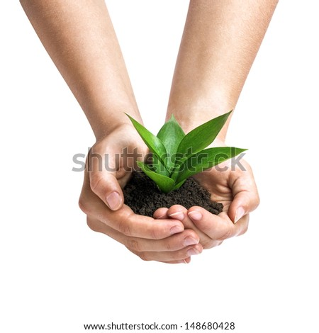 Hands holding a green sprout, isolated on white - stock photo