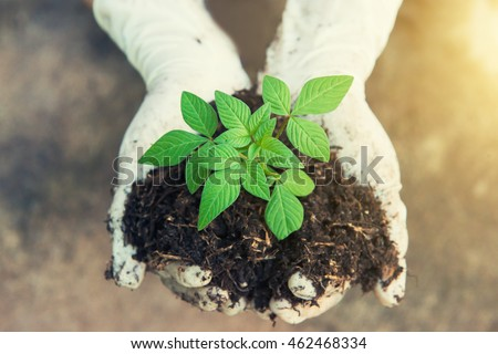 Hands holding a green young plant and light. vintage tone