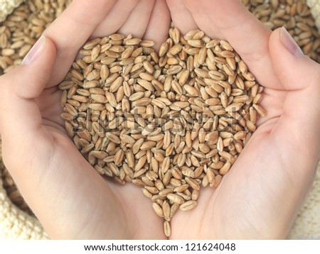 hands holding a heart that wheat over a canvas bag - stock photo