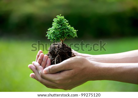 hands holding a small tree - stock photo