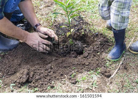 Hands Holding A Small Tree, New Development