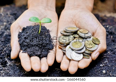 hands holding a tree and coins / making the right choice - stock photo