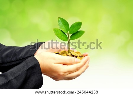 hands holding a tree growing on golden coins - business with csr practice - stock photo