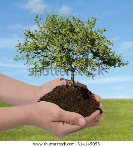 Hands holding a tree nature concept