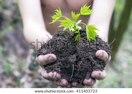 Hands holding a young plant