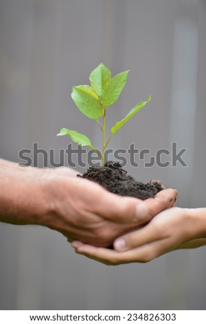 Hands holding a young tree sprout close-up