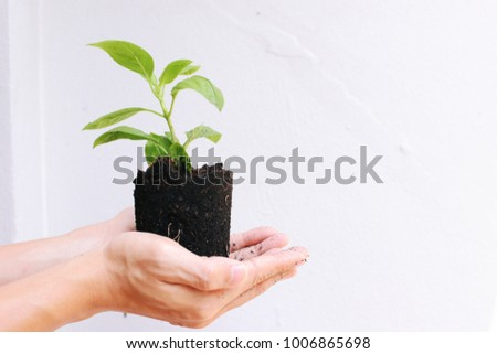 Hands holding and caring a green young plant white background